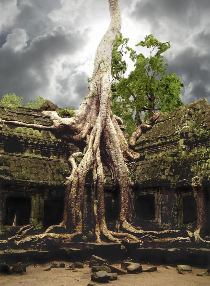 trees08 Самые странные деревья в мире