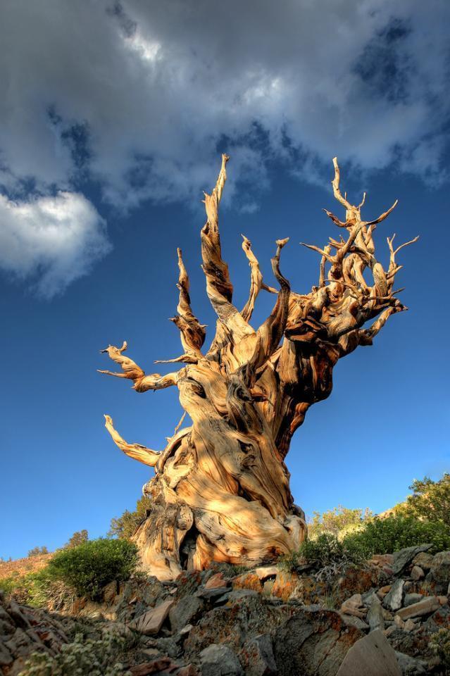 trees10 Самые странные деревья в мире