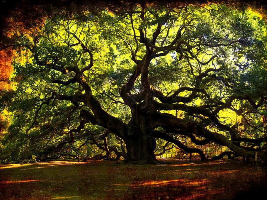 trees11 Самые странные деревья в мире