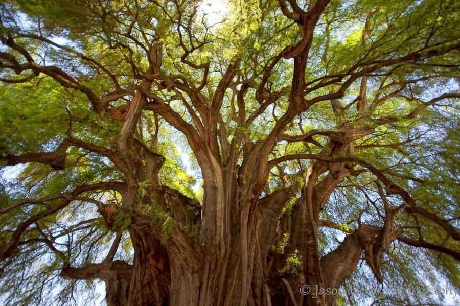 trees13 Самые странные деревья в мире