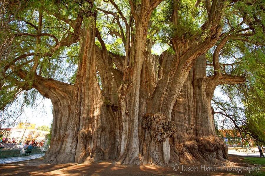 trees14 Самые странные деревья в мире
