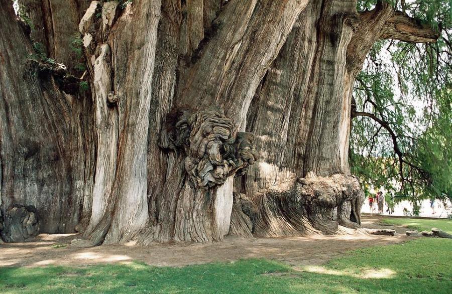 trees15 Самые странные деревья в мире