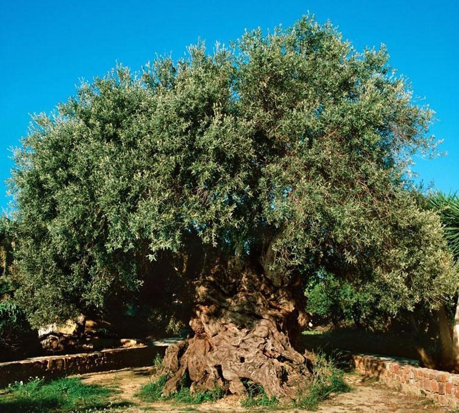 trees16 Самые странные деревья в мире