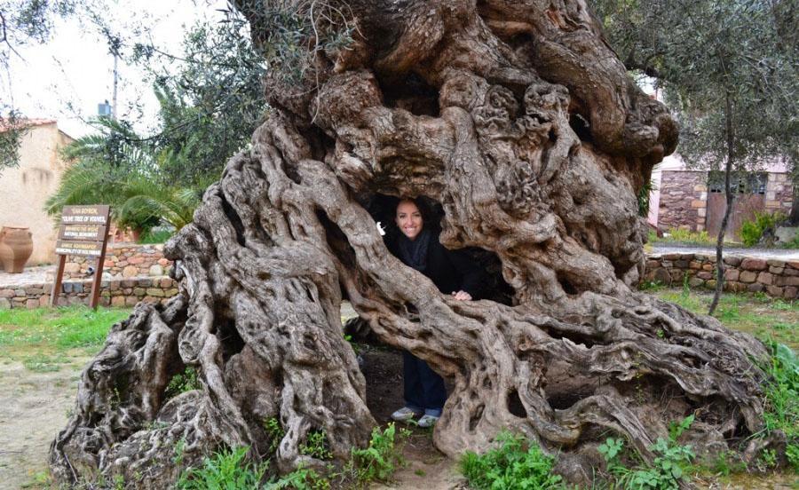 trees17 Самые странные деревья в мире