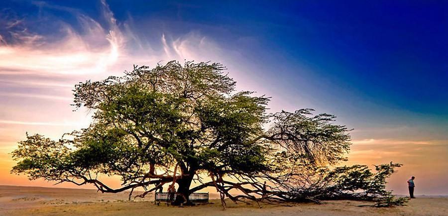 trees18 Самые странные деревья в мире