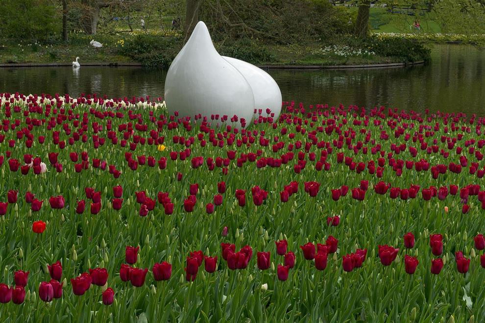 флаг россии фотографии самых красивых тюльпанов они эксклюзивного