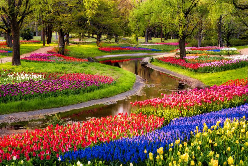 """Но главные весенние  """"звезды """" - это, конечно, цветы, а точнее - тюльпаны.  Сейчас."""