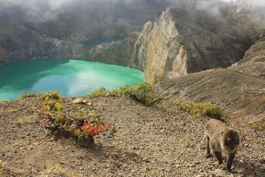 3961063943 dba72e6a88 b Уникальные трехцветные озера в кратере вулкана Келимуту