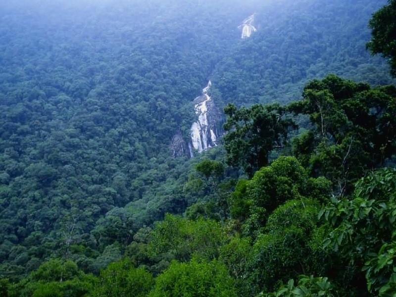 Amazonas04 Большое фотопутешествие по лесам Амазонки