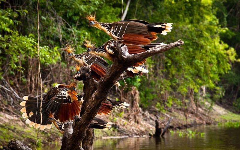 Amazonas06 Большое фотопутешествие по лесам Амазонки