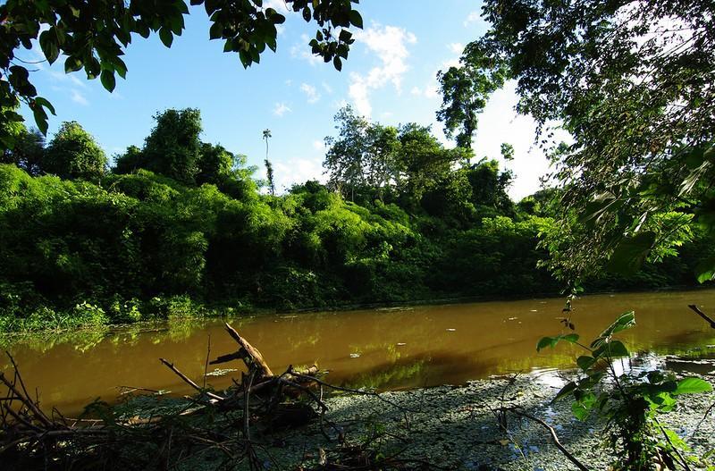 Amazonas09 Большое фотопутешествие по лесам Амазонки