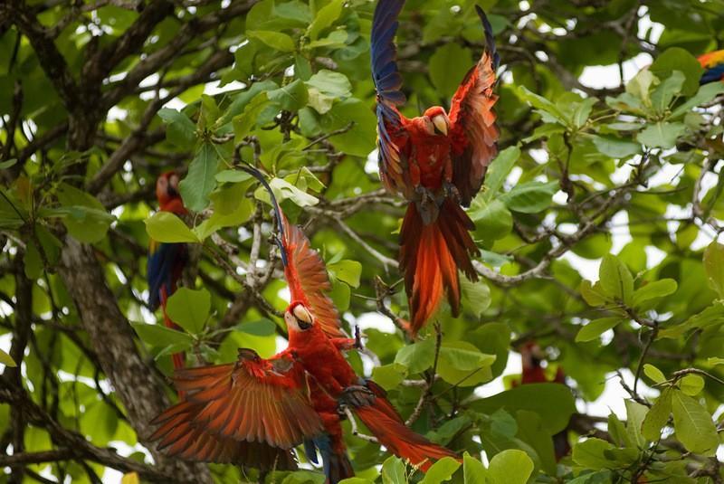 Amazonas15 Большое фотопутешествие по лесам Амазонки