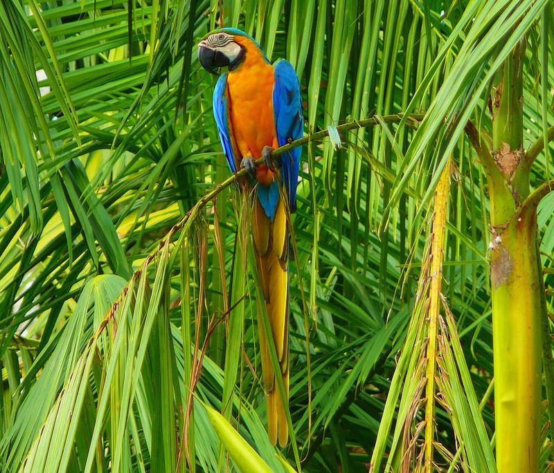 Amazonas16 Большое фотопутешествие по лесам Амазонки
