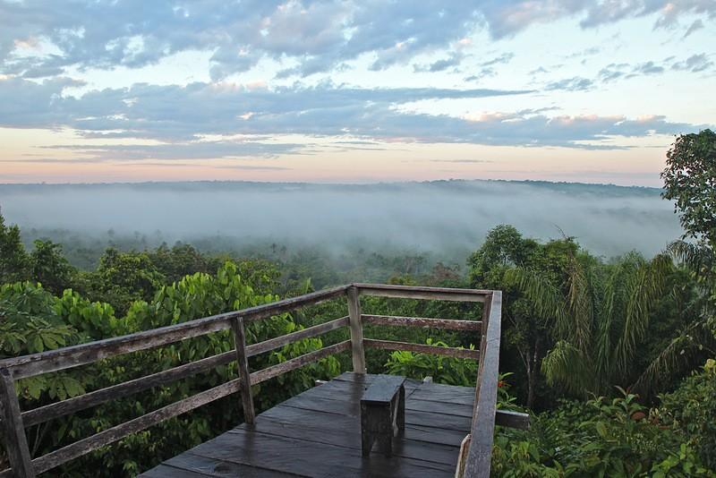 Amazonas22 Большое фотопутешествие по лесам Амазонки