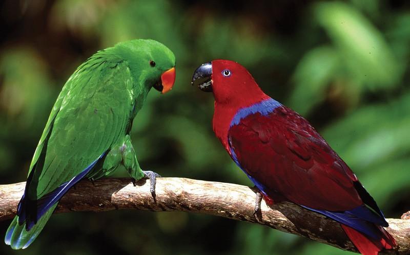 Amazonas28 Большое фотопутешествие по лесам Амазонки