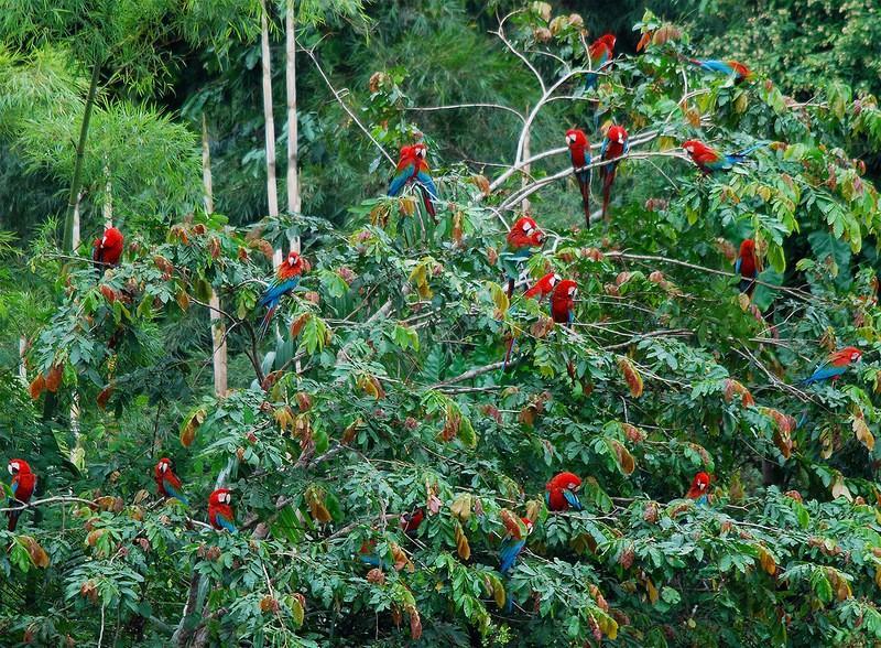 Amazonas30 Большое фотопутешествие по лесам Амазонки