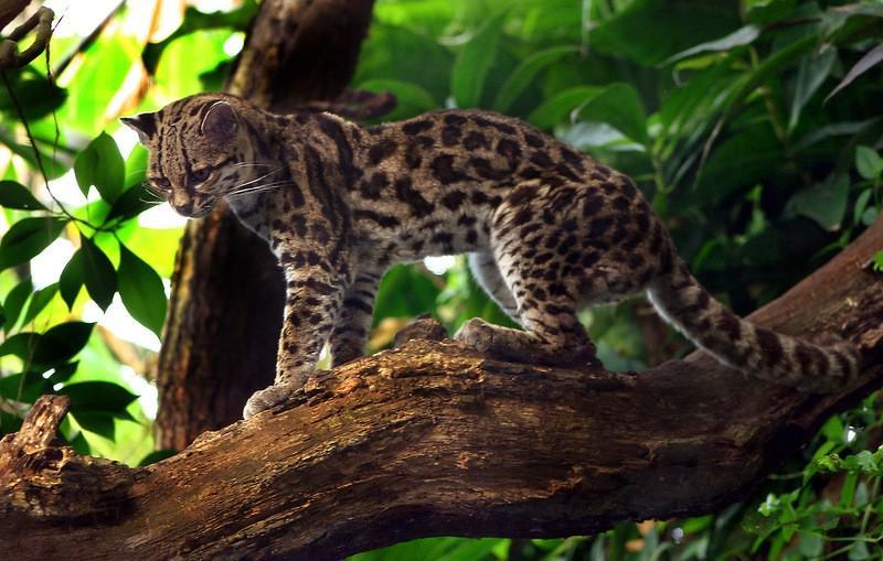 Amazonas32 Большое фотопутешествие по лесам Амазонки