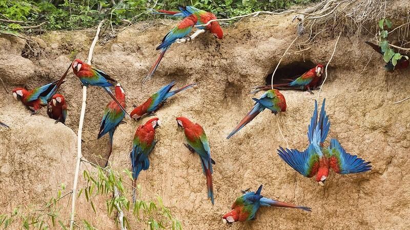 Amazonas33 Большое фотопутешествие по лесам Амазонки