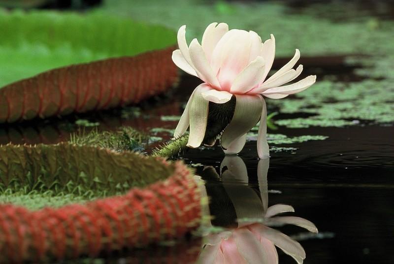 Amazonas36 Большое фотопутешествие по лесам Амазонки