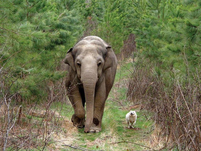 Животные-друзья
