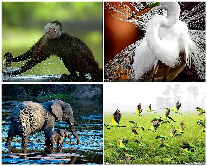 35 лучших фото животных на фотоконкурсе National Geographic Traveler