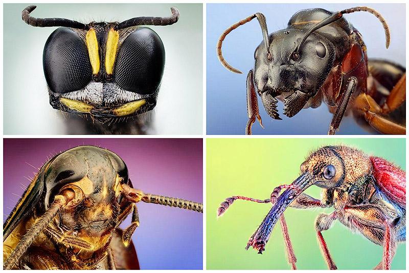 Кузнечик насекомое. Описание, особенности, виды и среда обитания кузнечика