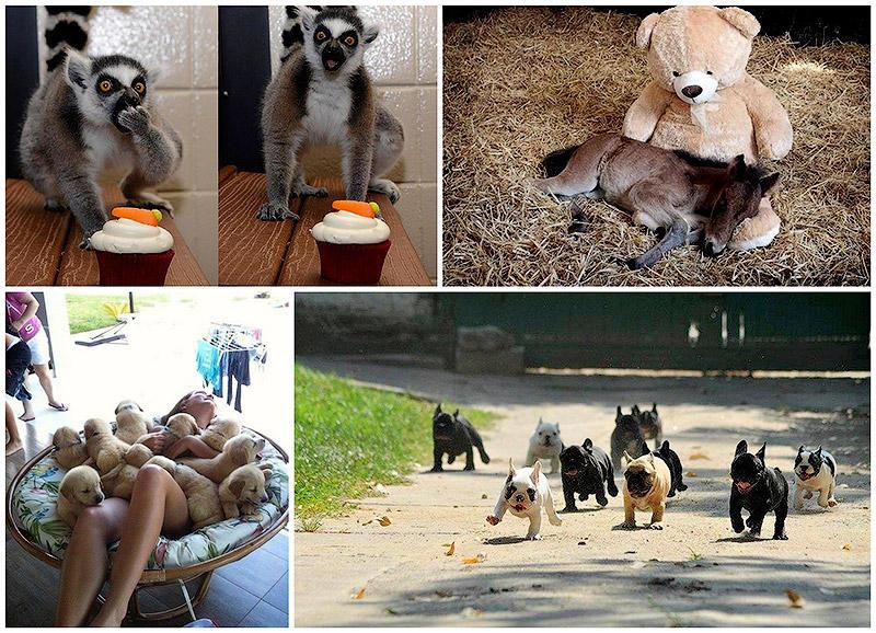 BIGPIC45 50 фотографии животных, которые вы просто обязаны увидеть