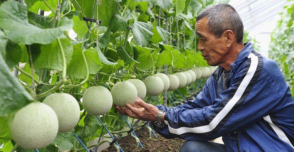 FruitParlor13 Самый дорогой в мире фруктовый салон