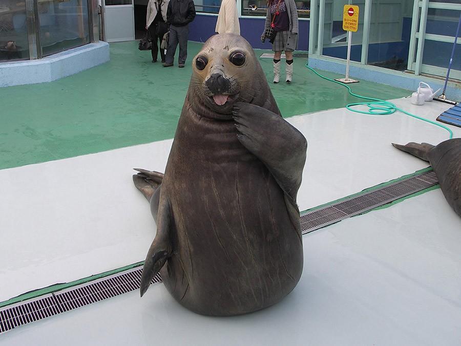 NeedToSee07 50 фотографии животных, которые вы просто обязаны увидеть