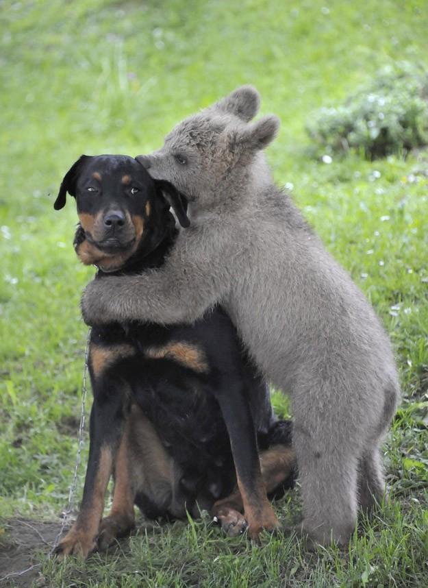 NeedToSee12 50 фотографии животных, которые вы просто обязаны увидеть