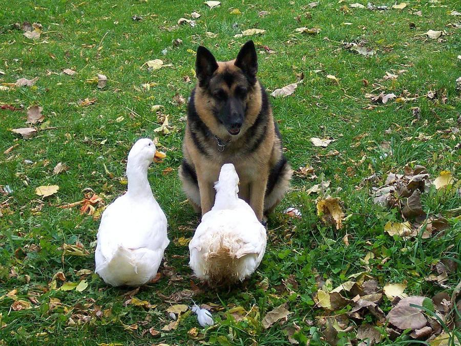 NeedToSee15 50 фотографии животных, которые вы просто обязаны увидеть