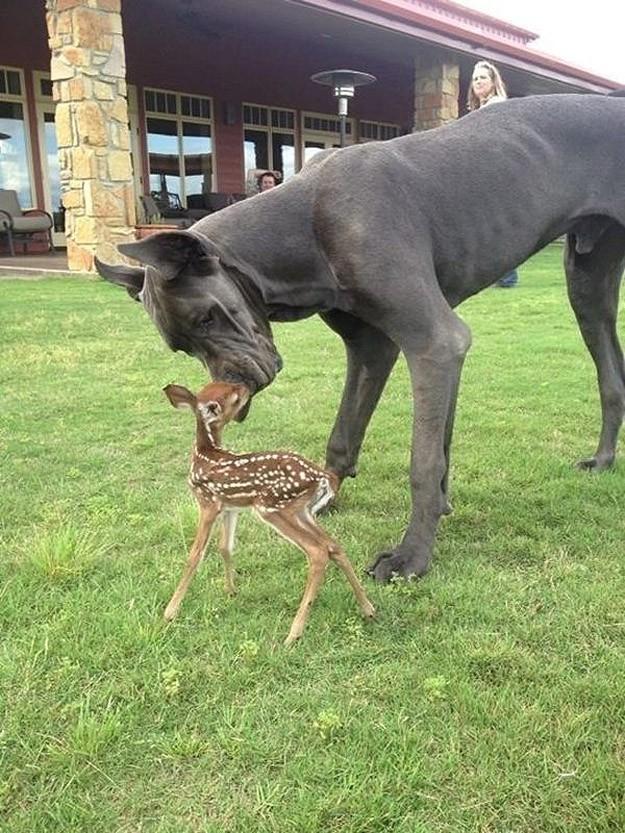 NeedToSee18 50 фотографии животных, которые вы просто обязаны увидеть