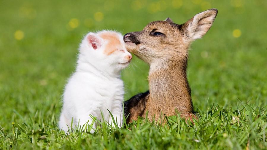 NeedToSee19 50 фотографии животных, которые вы просто обязаны увидеть