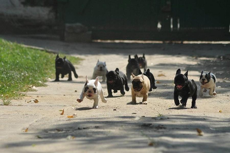 NeedToSee20 50 фотографии животных, которые вы просто обязаны увидеть