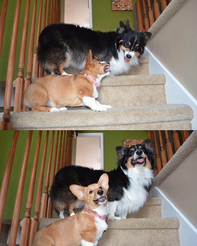 NeedToSee24 50 фотографии животных, которые вы просто обязаны увидеть