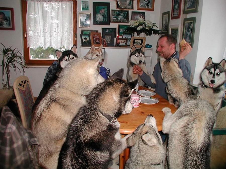 NeedToSee30 50 фотографии животных, которые вы просто обязаны увидеть