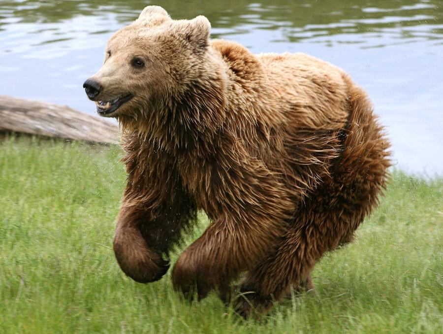 NeedToSee36 50 фотографии животных, которые вы просто обязаны увидеть