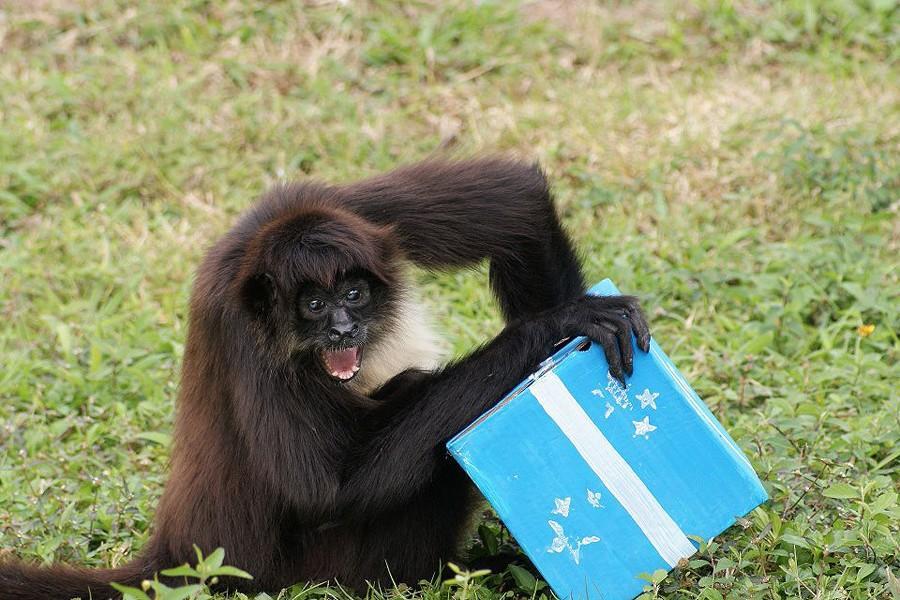 NeedToSee42 50 фотографии животных, которые вы просто обязаны увидеть