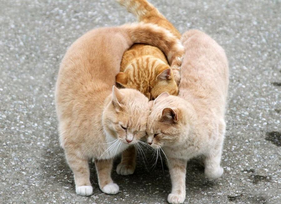NeedToSee43 50 фотографии животных, которые вы просто обязаны увидеть