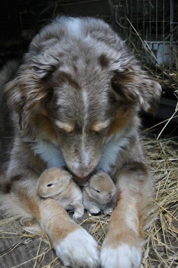 NeedToSee49 50 фотографии животных, которые вы просто обязаны увидеть