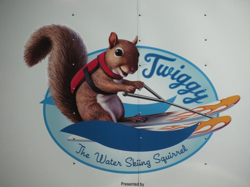Twiggy14 Твигги   белка, которая любит водные лыжи