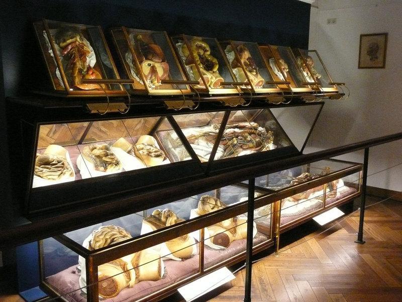 anatomy02 6 самых шокирующих анатомических музеев мира