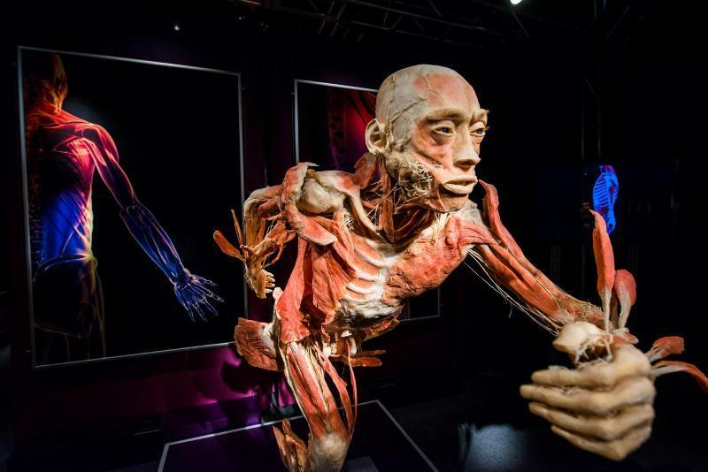 anatomy03 6 самых шокирующих анатомических музеев мира