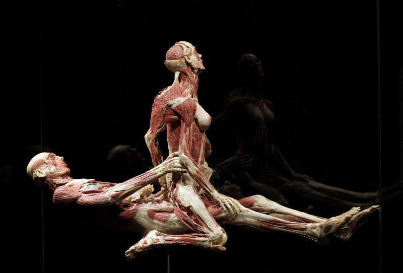 anatomy04 6 самых шокирующих анатомических музеев мира