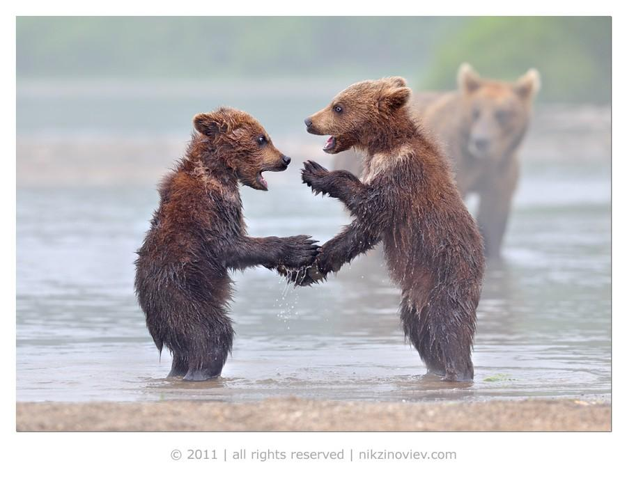 bffanimals15 Животные друзья