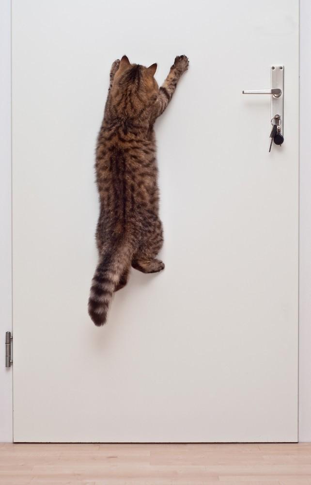 cats02 Фотограф и его коты