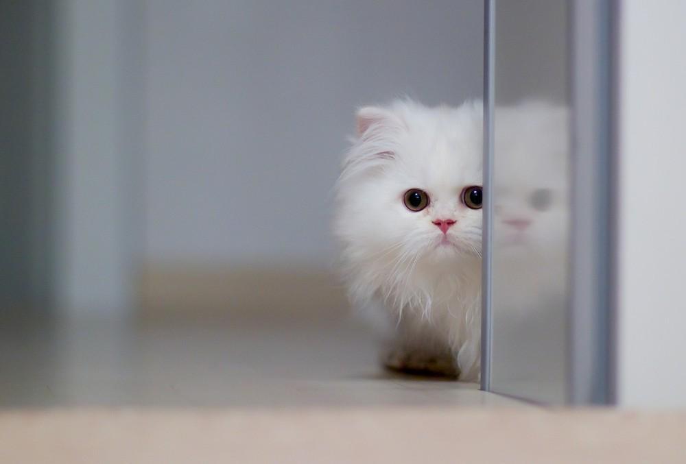 cats03 Фотограф и его коты