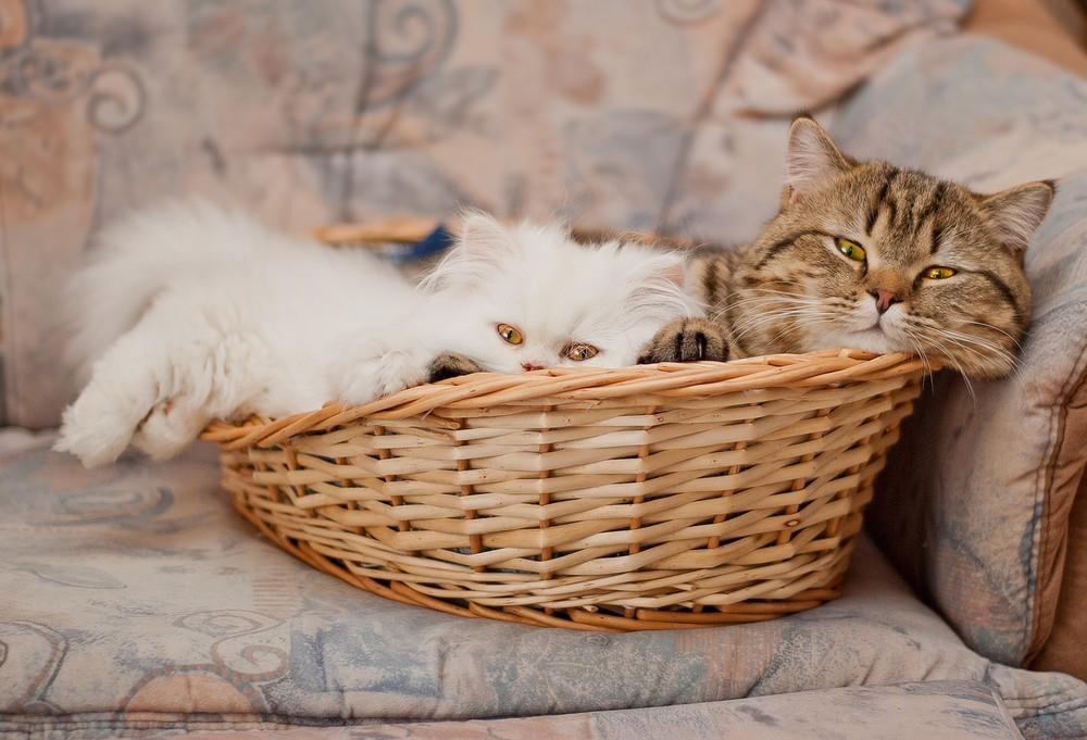 cats14 Фотограф и его коты