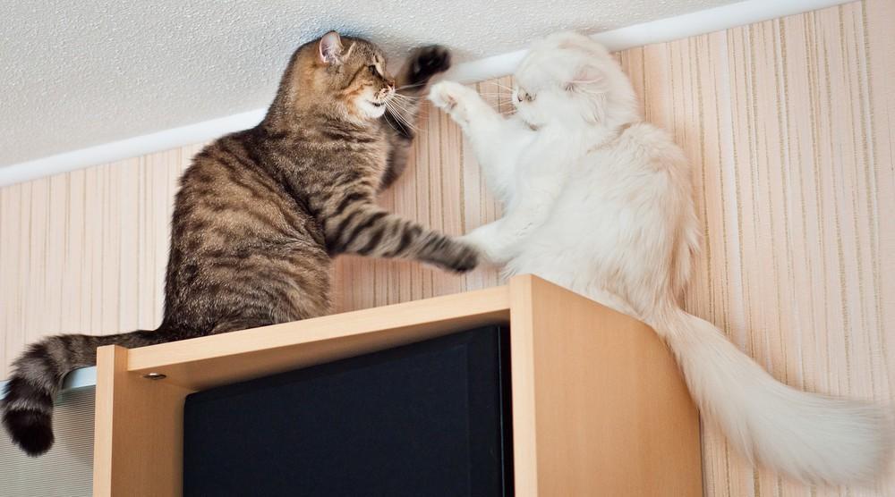 cats17 Фотограф и его коты