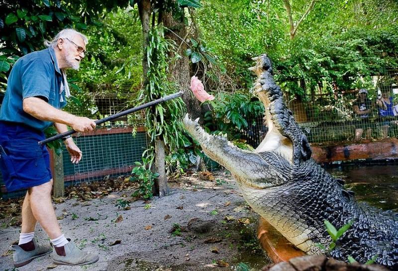 Кассиус Клей — самый большой крокодил вмире